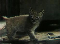 Тропой бескорыстной любви (1971) DVDRip