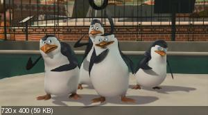 Пингвины из Мадагаскара / The Penguins of Madagascar (2-3 сезон) (2010-2011) HDTVRip