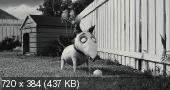 Франкенвини / Frankenweenie (2012) DVDRip