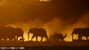 Эхо: Воспоминания о слонихе / PBS: Nature - Echo: An Elephant to Remember (2010) BD Remux