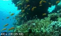 Неизведанные острова / Wildest Islands (2012) SATRip