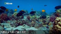 Неисследованные глубины / Alien Deep with Bob Ballard (2012) HDTVRip 720p