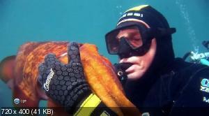 Чудеса дикой природы с Девидом Айрлендом / The Wildlife man featuring David Ireland (2011) HDTVRip