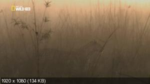 Необычный леопард / The Unlikely Leopard (2012) HDTV 1080i