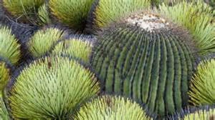 Растения пустыни фото с названиями - 43